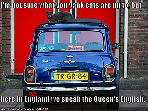Funny-pictures-british-cat